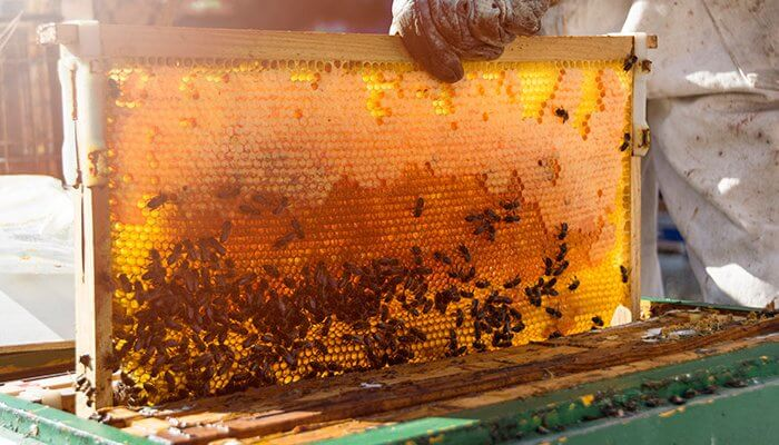 Honey – The Miracle Aid for Acne